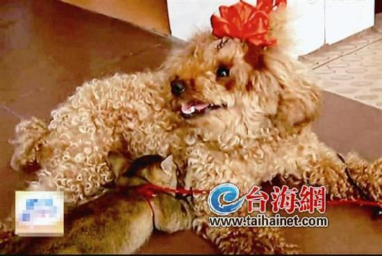 郭阿姨素来喜欢小动物,看着可怜的小猫,便把它捡回了家.