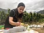 郑惠平对刚采摘下来的丝瓜进行检测。 - 新浪