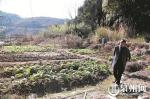 遗址所在地部分被村民开垦成为菜地 - 新浪