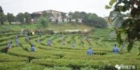 茶香四溢茶旅相融 南靖茶旅文化节开采吸引八方游客 - 新浪
