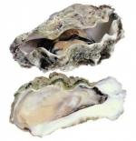 牡蛎 - 福建新闻