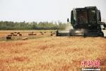 农业农村部:力争冬小麦稳定在3.3亿亩以上 - 人民代表大会常务委员会