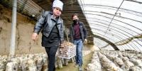 固原市原州区利民村种植的香菇喜获丰收。(陈翔供图) - 福建新闻